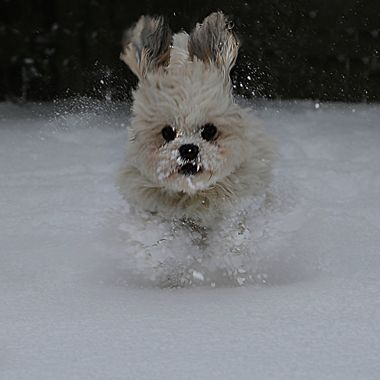 Abominable Snow Pup