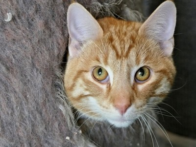 Cat Peek a Boo