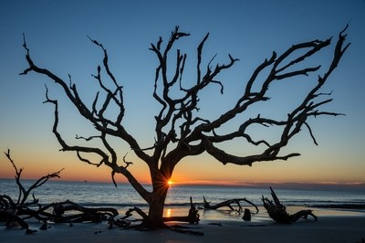 """Sunrise on """"Tree Skeleton Tree beach, Jeykll Island Georgia."""