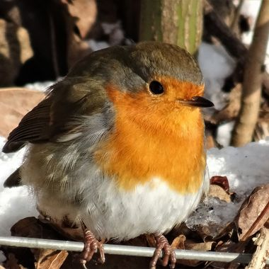 Greeted with this wee Robin on my walk on a freezing cold snowy day certainly warmed my heart