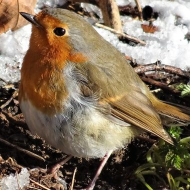 Glad I met this wee Robin and happy I got his Photo ,the weather was cold & Windy and he was staying low .