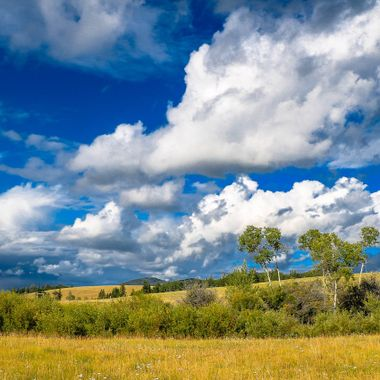 The grasslands around Douglas lake B C