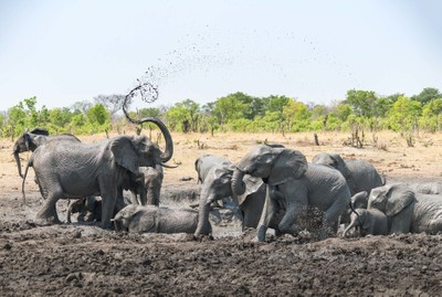 Playtime at the waterhole