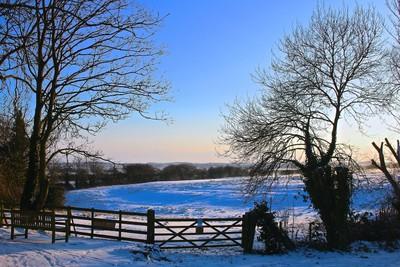Snowy Yaxley Fen