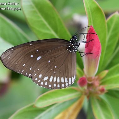 Butterfly - black & white on red flower 2 - DMK