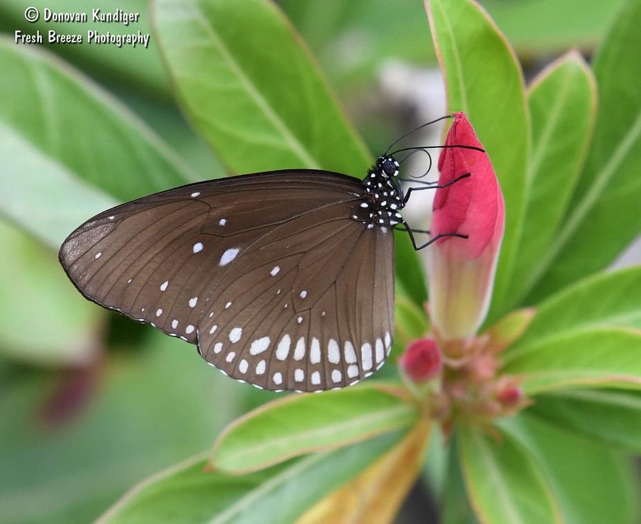 Butterfly - black & white on red flower 2 - DMK