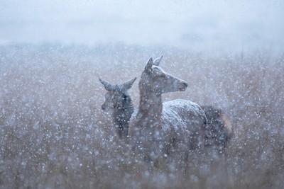 Snow catchers