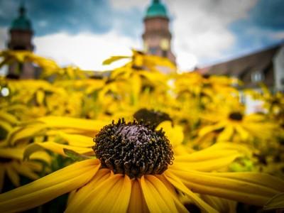 Freudenstadt flowers