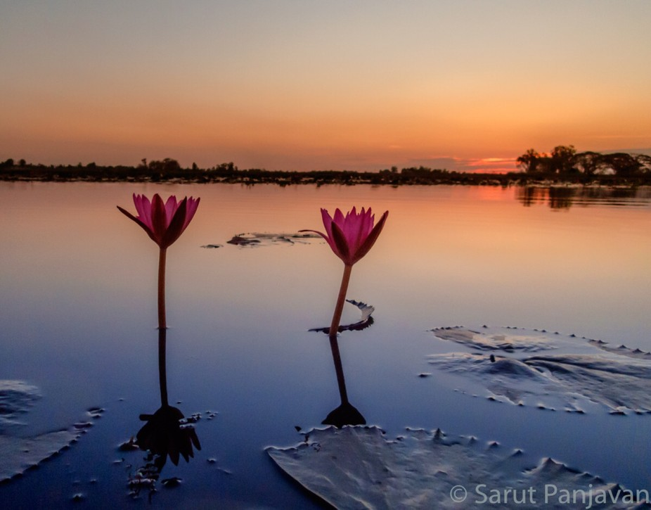 Early morning at the Red Lotus Lake in Udon Thani