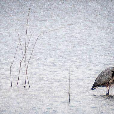 Heron and egret on Lake Travis near Austin, Texas