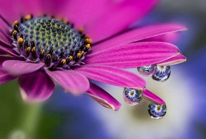 Water Droplets by Reallycrazykiwi - Pastel Colors Photo Contest
