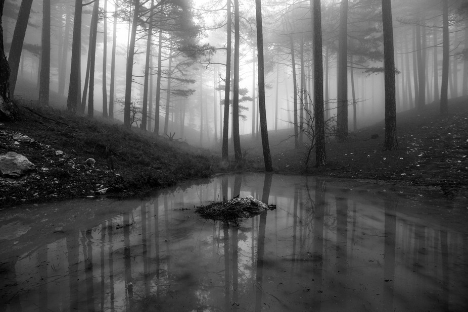 Took this shot during trekking Mt Karvounis in Samos island, Greece. It was a cold winter foggy d...