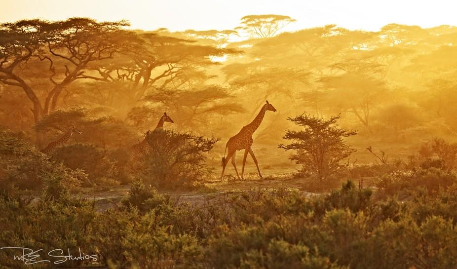 A magical moment in Tanzania
