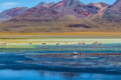 Flamingos on a lagoon, Salar Uyuni, Bolivia