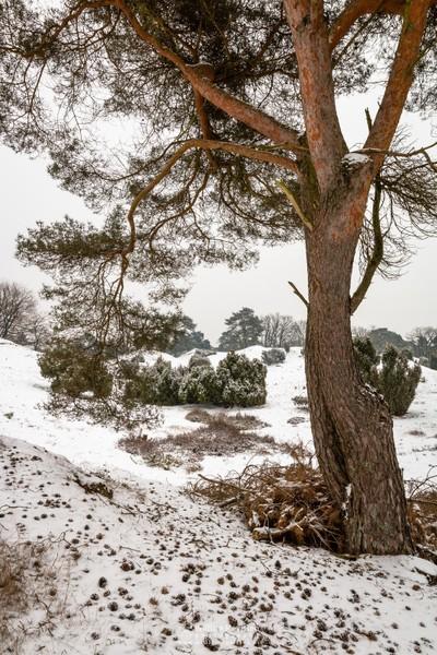 White Winter Tree View