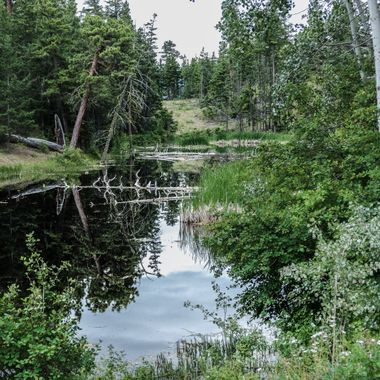 This little Pond is on one of the back roads around Merritt B C