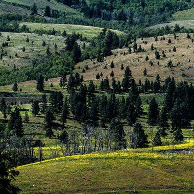 This is the landscape around Upper Nicola B C