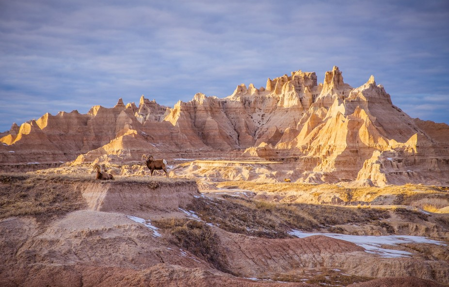Badlands and Rams. South Dakota