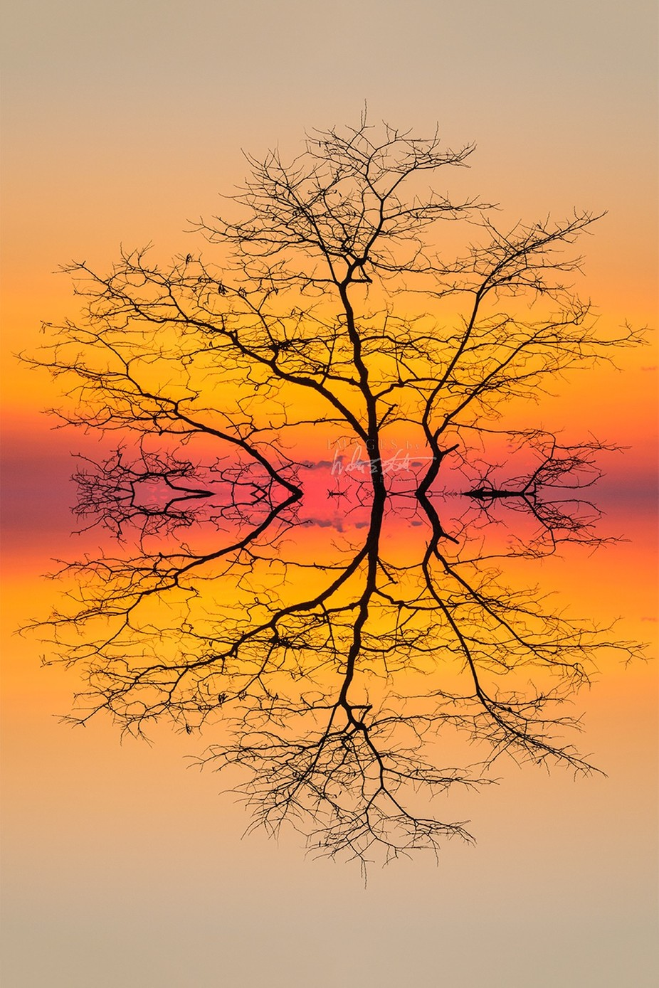 mirror tree by walterelliott - Creative Landscapes Photo Contest