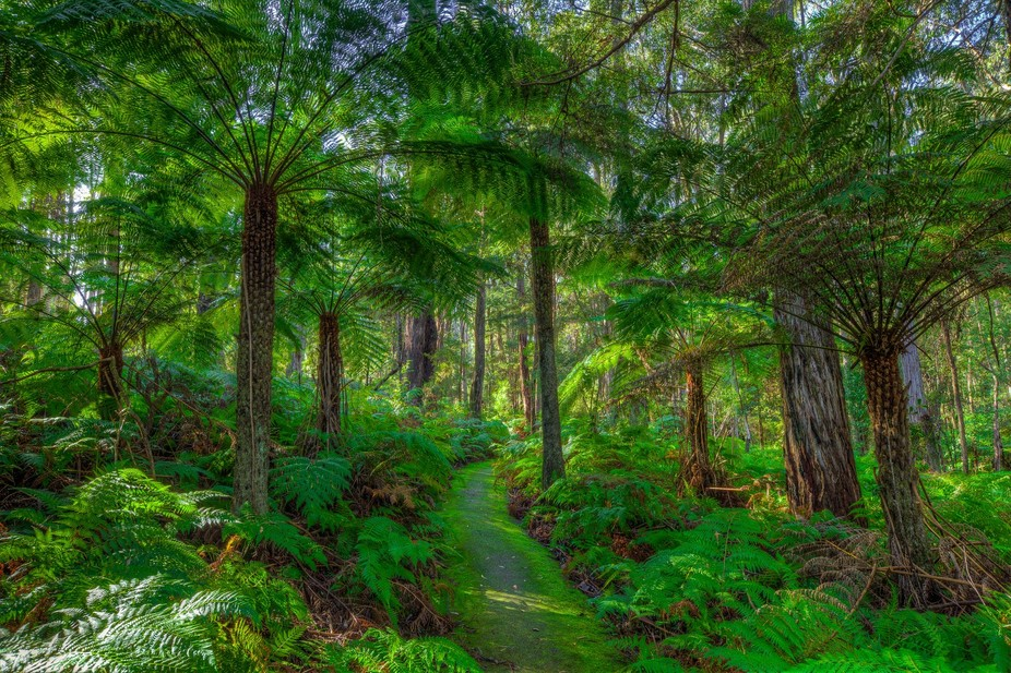 The Mackenzie River Rainforest Walk is a perfect opportunity for travellers to stop, break their ...