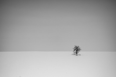 Minimal - lonely leafless tree on snowy winter hill