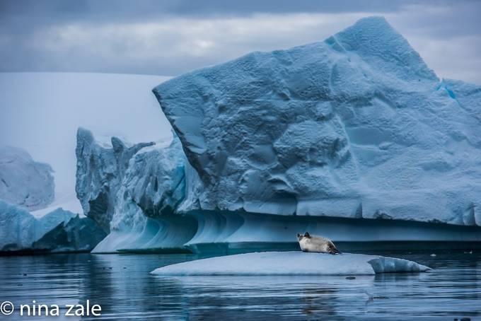 untitled-46734673 by ninapritikinzale - Winter Wildlife Photo Contest