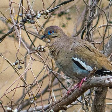 Posing in a tree near Lake Travis, Texas
