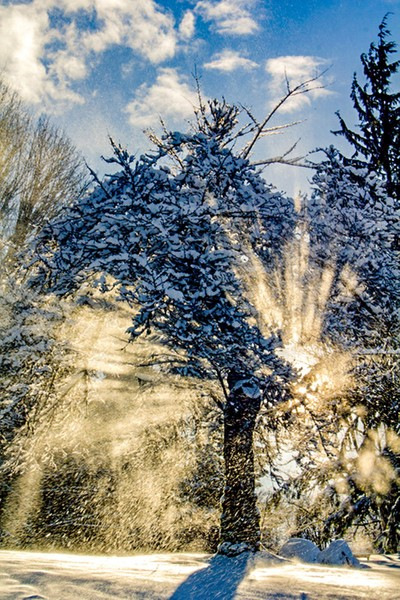 Sunshine through the tree covered snow