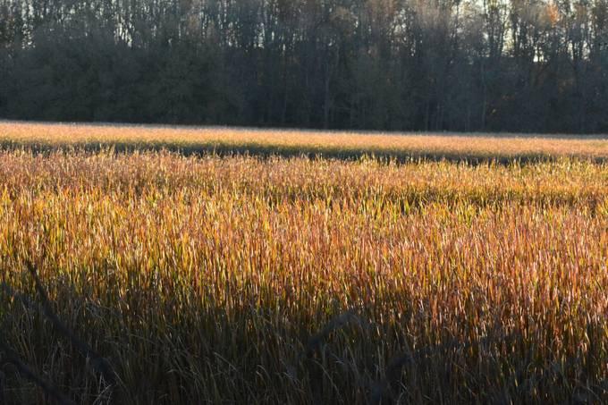 Lynde Shores Conservation Area