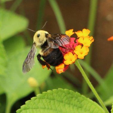 Summer. Bee