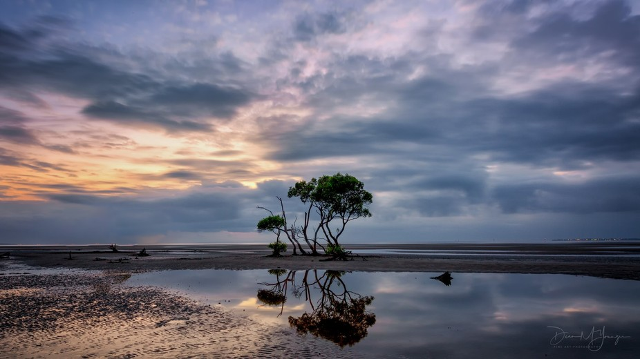 A Lonely Tree at Beachmere in South East Queensland at sunrise.
