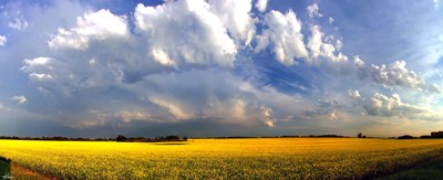 Super Cell over the Canola