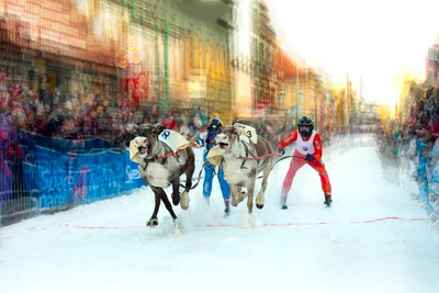 The reindeer race