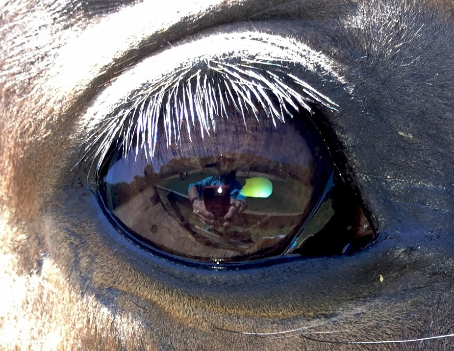 In the eyes of the horse....