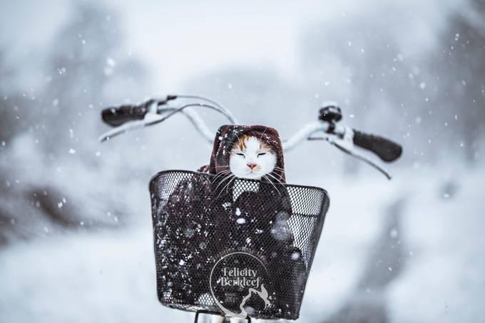 A Snow Blizzard by felicityberkleef - The Cold Winter Photo Contest