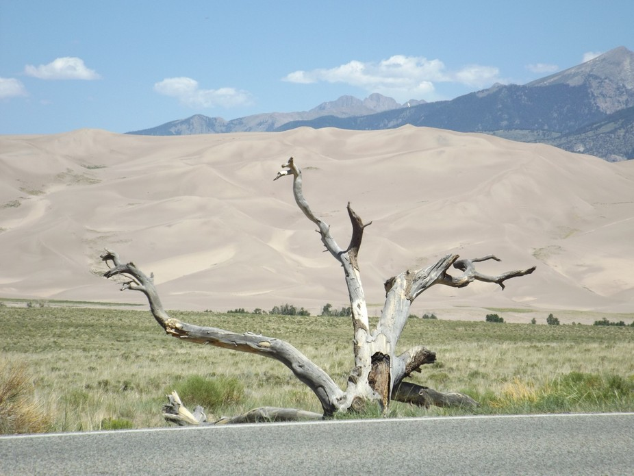 Old dead tree with sand dunes and mountains in the back ground