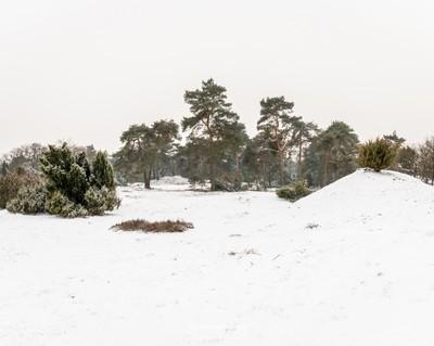 Winterscenery Boshuizerbergen
