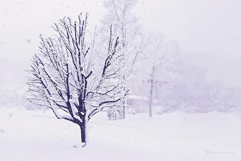 white tree 1