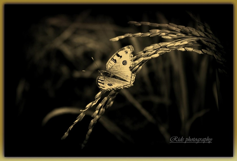 """...a butterfly is like the soul of a person, it dries out in captivity."""""""