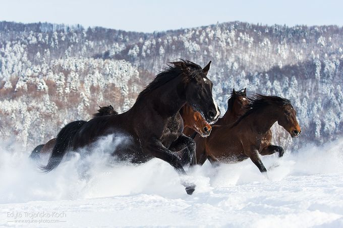 Winter fun by edytatrojaskakoch - Fast Photo Contest