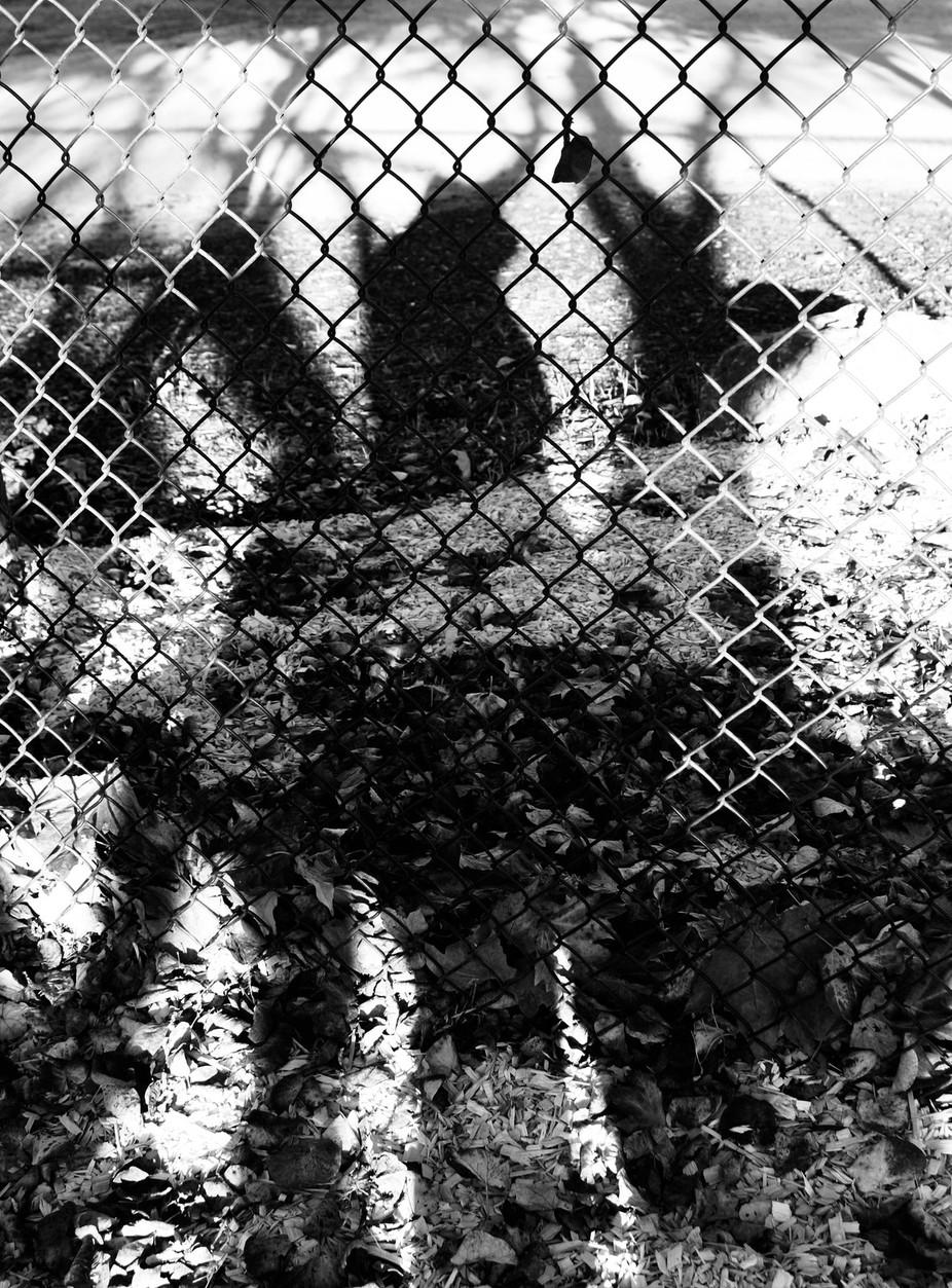 _DSC9318 3.  The Shadows of Gossip