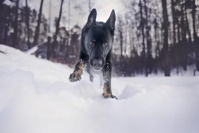 Beware of black wolves