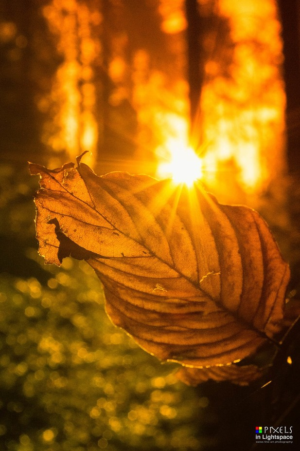Leaf in the sun (orange) by PixelsInLightspace - Flares And Glitter Photo Contest