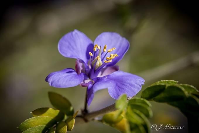 A Desert Bloom