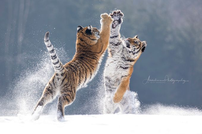 high five by Anneliese-Photography - We Love The Winter Photo Contest