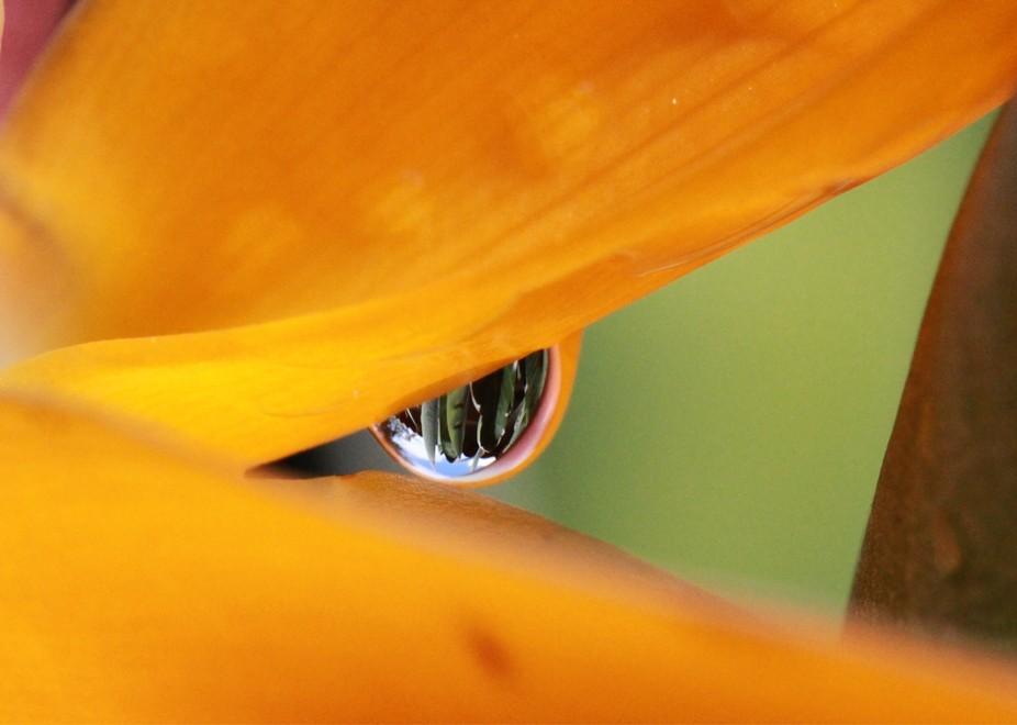 """Bird Eye of Paradise"""
