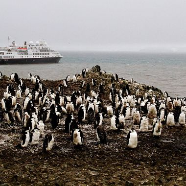 Antarctic welcoming committee!