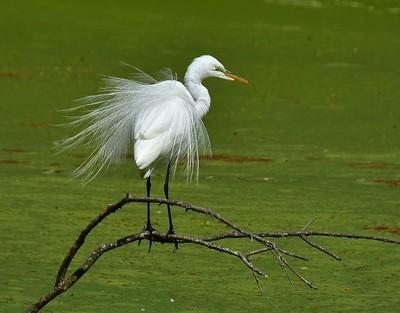 egret display