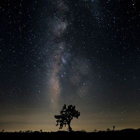 The milky way core set over a joshua tree in Joshua Tree National Park