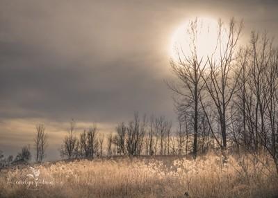 Gloomy Winter Days